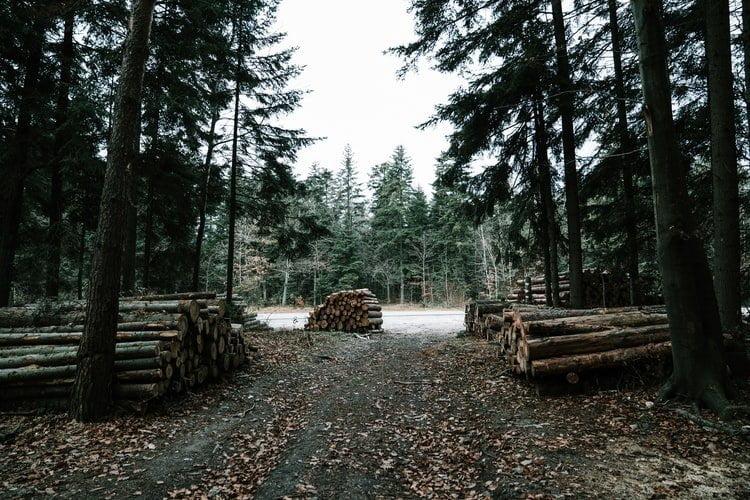 Romania, milioni di alberi tagliati illegalmente