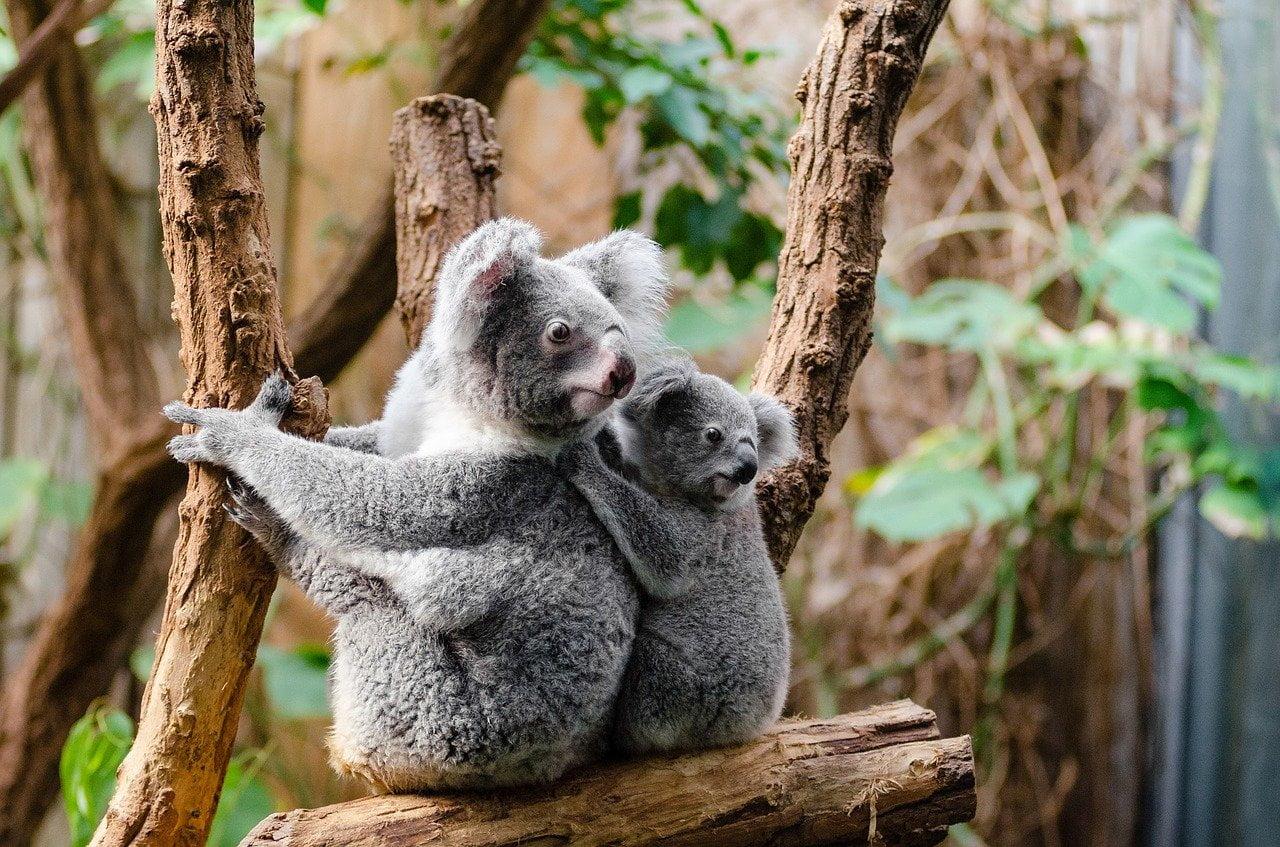 Australia, incendio favorisce estinzione animali