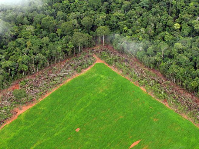 Deforestazione Amazzonia: quando la natura non ha voce