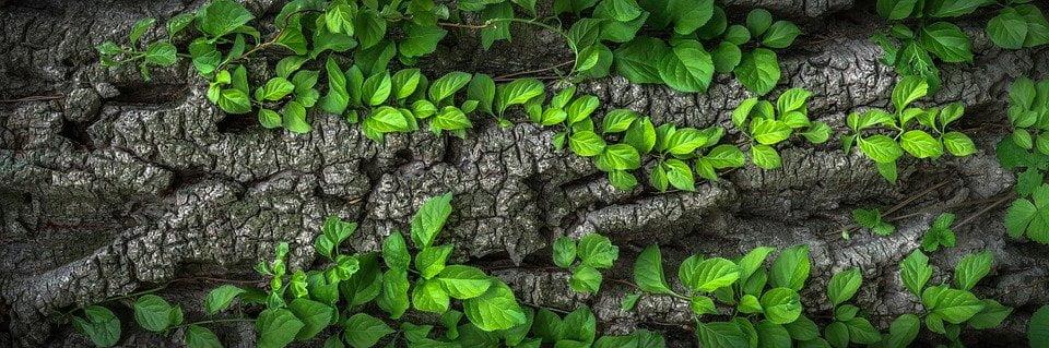 Per ripartire prendiamo spunto dalle piante