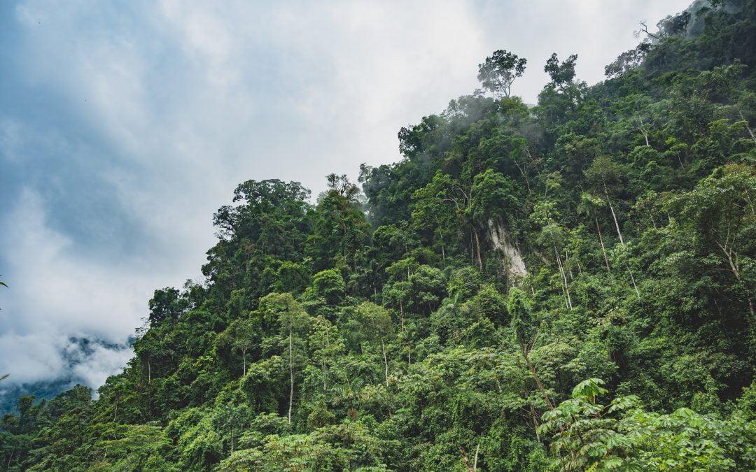 La pandemia può tornare per lo sfruttamento dell'Amazzonia