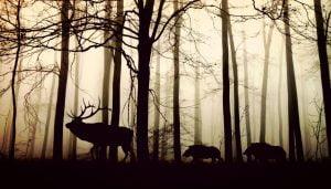 biodiversità UE