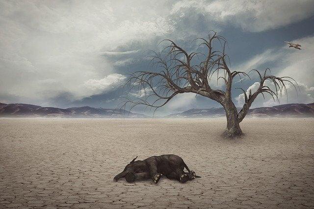 L'elefante ucciso dall'ananas e dai petardi: ipocrisia o disinformazione?