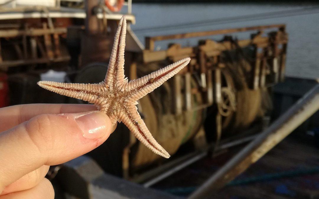 Distruzione dei mari: una scelta consapevole e pericolosa