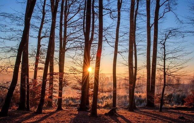 foreste-disboscamento-tramonto