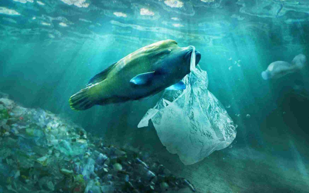 Stretto di Messina e l'incubo della plastica nei fondali