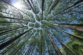 Deforestazione: 'Quanta foresta avete mangiato, usato o indossato oggi?'