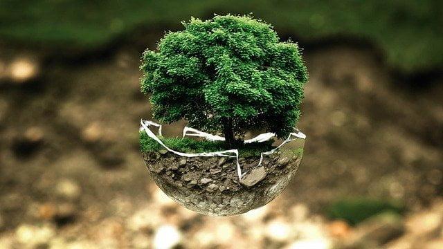 Decarbonizzazione-tree-glass