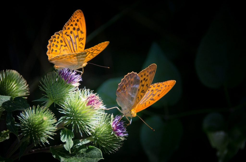 Il valore della biodiversità: perché è importante per noi