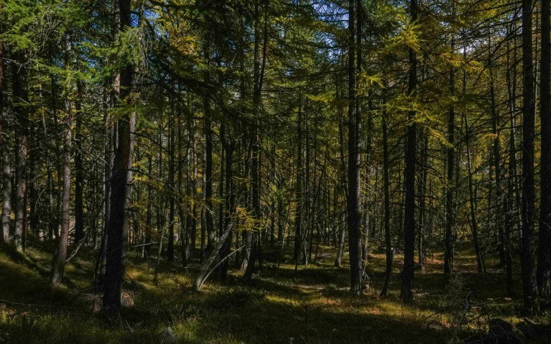 World Wildlife Day 2021: protagoniste le foreste del Pianeta
