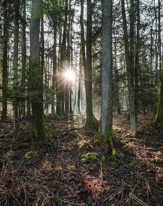 Le foreste e l'uomo, relazione complessa anche alla luce del cambiamento climatico