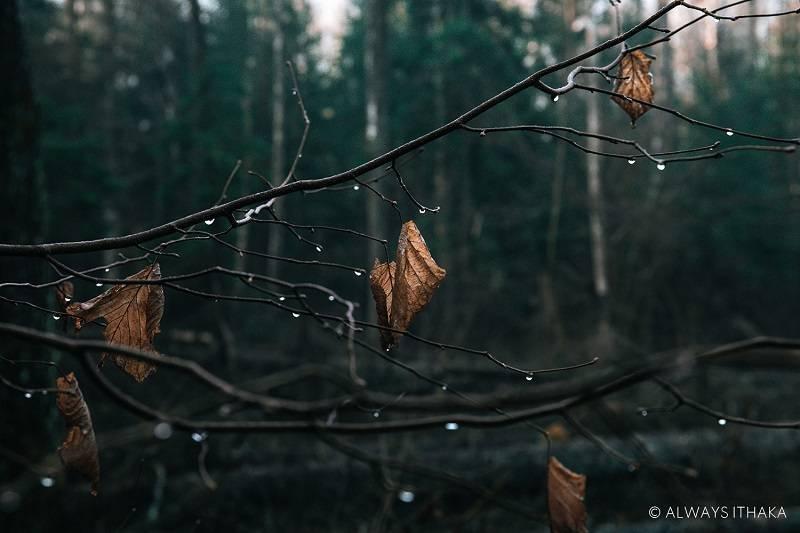 foreste Always Ithaka