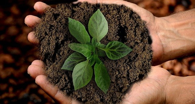 Dieta sostenibile: il rapporto tra alimentazione e ambiente