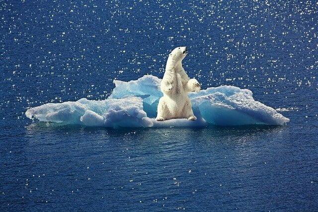 clima-orso-polare