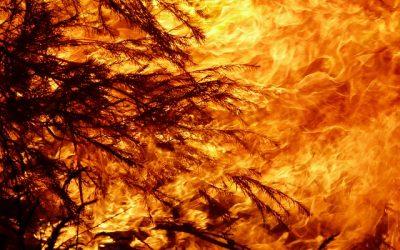 Perché la crisi climatica e l'attività dell'uomo c'entrano con gli incendi che stanno colpendo la Sardegna